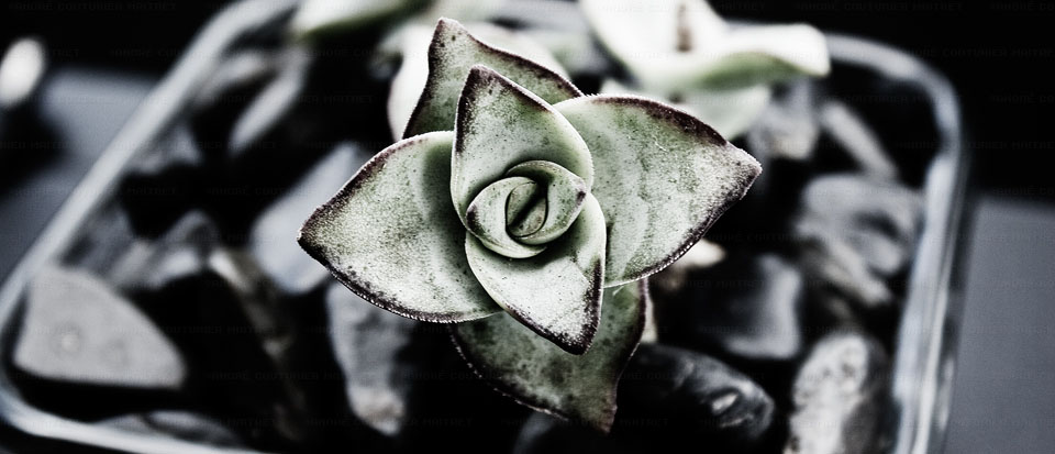 andre-couturier-maitret-random-flower-influx-5-14-10